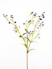 Dark Blue Gypsophila Artificial Flowers