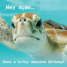 Silly Zoo Turtley Awesome Dude Birthday Greetings Card