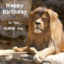 Silly Zoo Mane Man Birthday Greetings Card