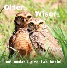 Silly Zoo Older Wiser Birthday Greetings Card