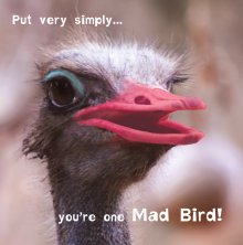 Silly Zoo Mad Bird Birthday Greetings Card