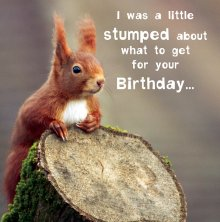 Silly Zoo Stumped Birthday Greetings Card