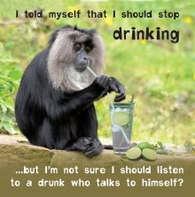 Silly Zoo Stop Drinking Birthday Greetings Card